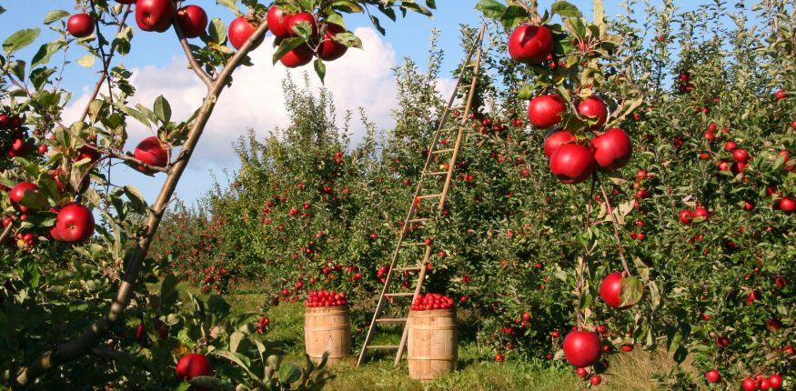 חקלאות אקולוגית